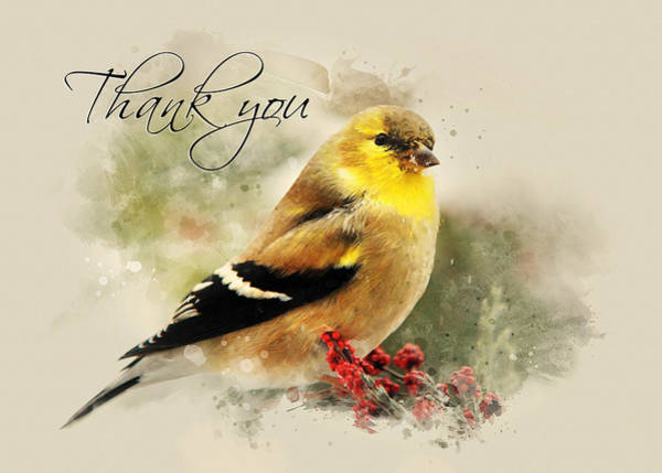 Bird Watercolor Mixed Media - American Goldfinch Watercolor Thank You Card by Christina Rollo