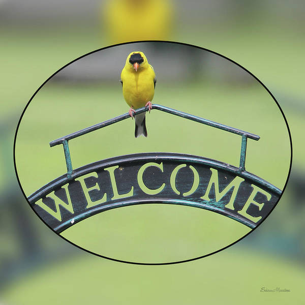 Photograph - American Goldfinch Welcome by Ericamaxine Price