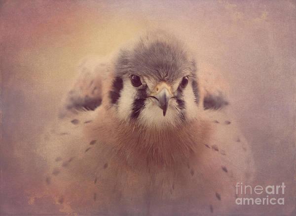 Photograph - American Kestrel 2 by Chris Scroggins