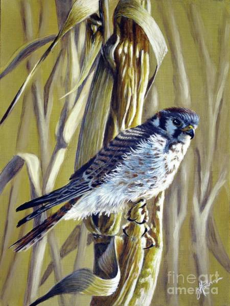 Painting - American Kestrel by Greg and Linda Halom