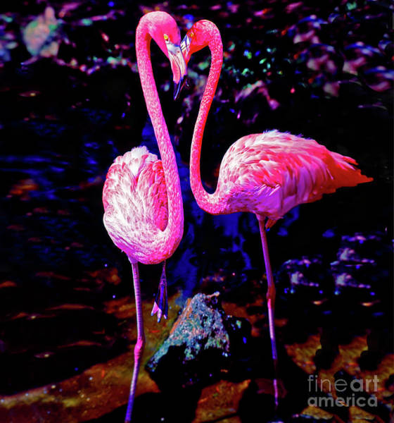 Photograph - American Pink Flamingos Orlando Fl 3030300148 by Tom Jelen