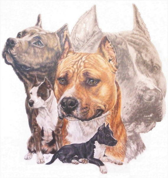 Drawing - American Pit Bull Terrier Grouping by Barbara Keith