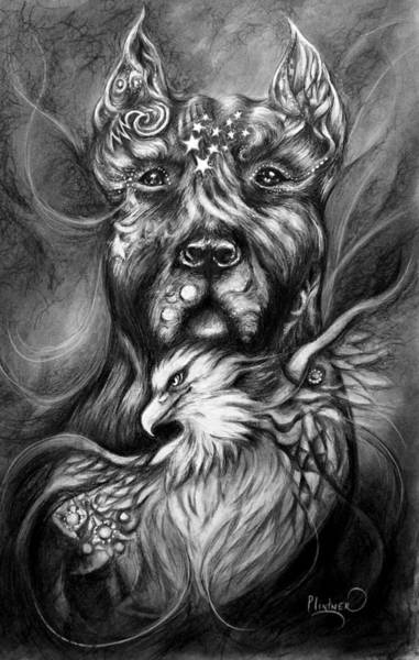 Drawing - American Pitbull by Patricia Lintner