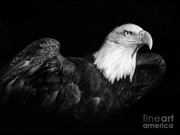 Eagle Drawing - American Pride by Miro Gradinscak