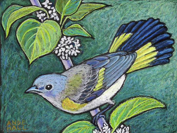 Birder Painting - American Redstart Female by Ande Hall