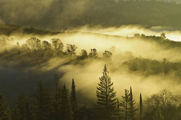American River Canyon In The Fog Art Print