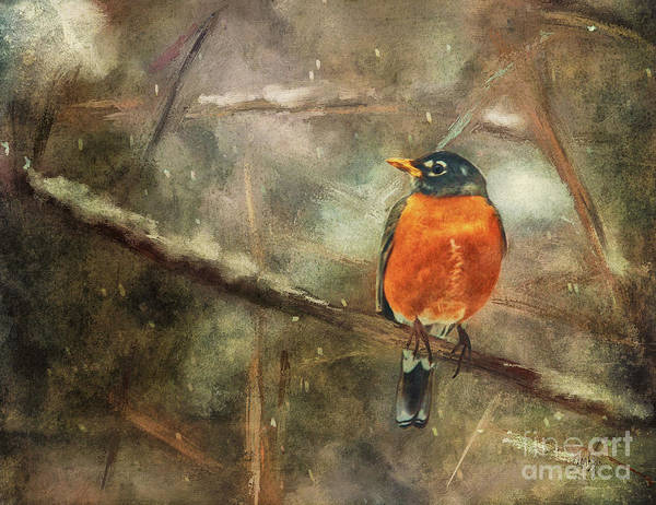 Digital Art - American Robin In The Snow by Lois Bryan