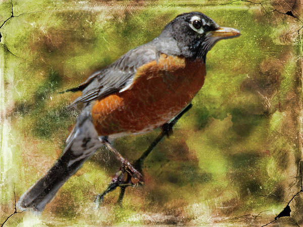 Digital Art - American Robin by Rusty R Smith