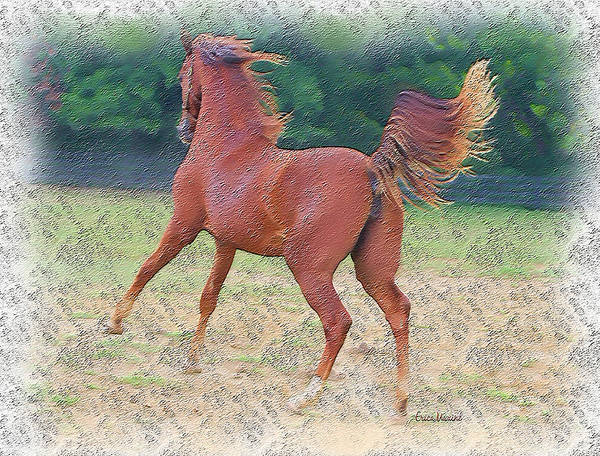 Photograph - American Saddlebred Filly by Ericamaxine Price