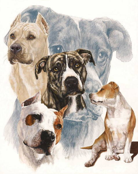 Mixed Media - American Staffordshire Terrier Medley by Barbara Keith