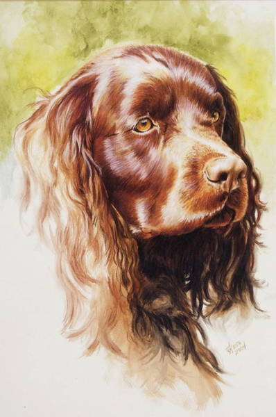 Painting - American Water Spaniel In Watercolor by Barbara Keith