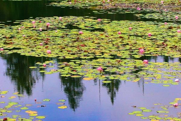 Photograph - Ames Pond Stonington Maine by Polly Castor