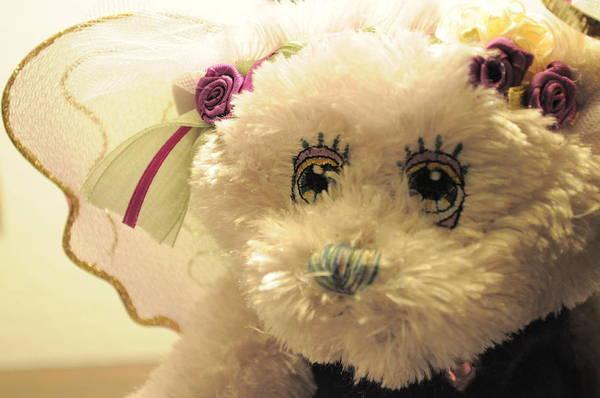 Photograph - Amethyst Fairy Bear by Bridgette Gomes