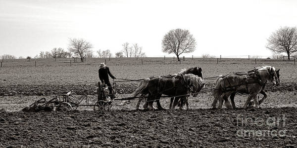 Photograph - Amish Farming by Olivier Le Queinec
