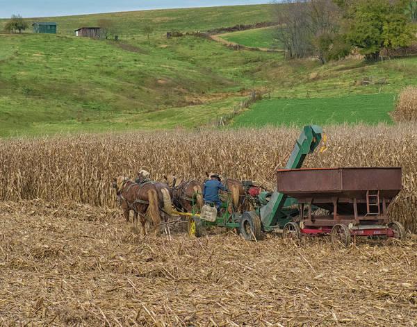 Wall Art - Photograph - Amish Harvest In Ohio  by Richard Kopchock