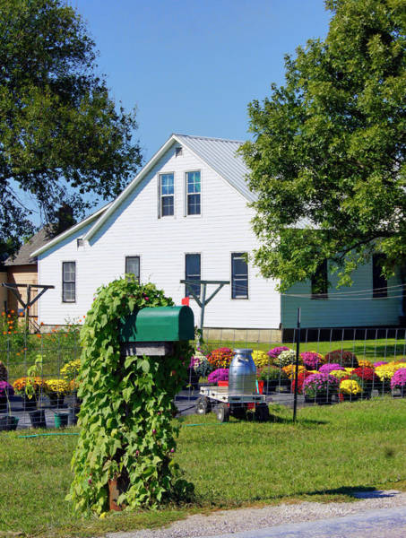Photograph - Amish House With Mums by Cricket Hackmann