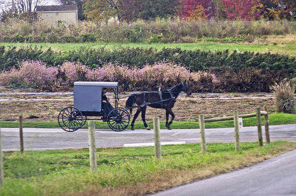 Photograph - Amish In Chester County by Susan Maxwell Schmidt