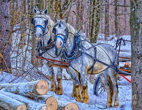 Bernadette Photograph - Amish Logging Horses by Bernadette Chiaramonte