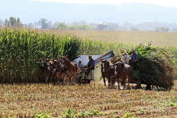 Photograph - Amish Men Harvesting Corn by Steven Frame