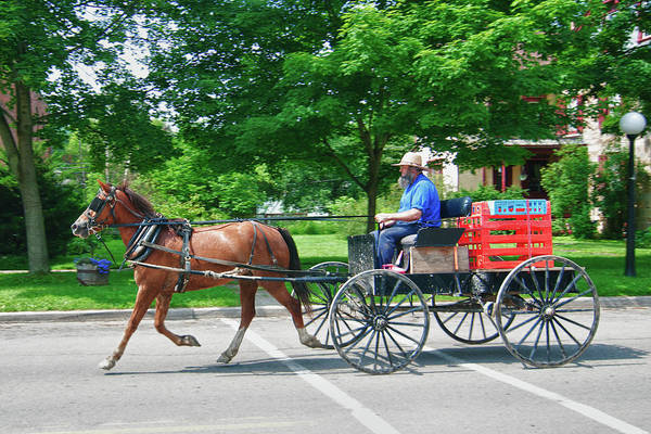 Photograph - Amish Merchant 5671 by Guy Whiteley