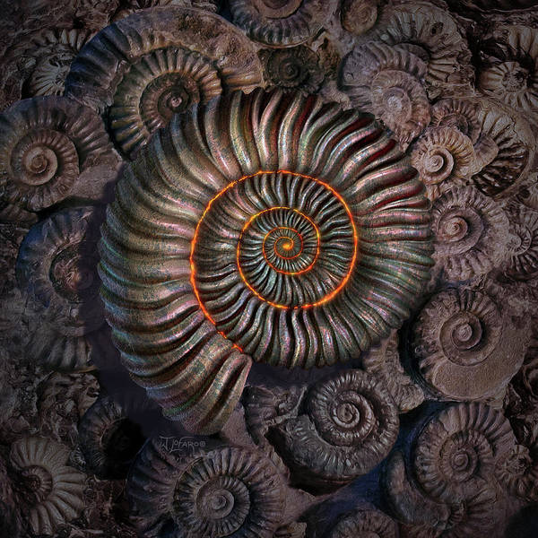Natural Digital Art - Ammonite 1 by Jerry LoFaro