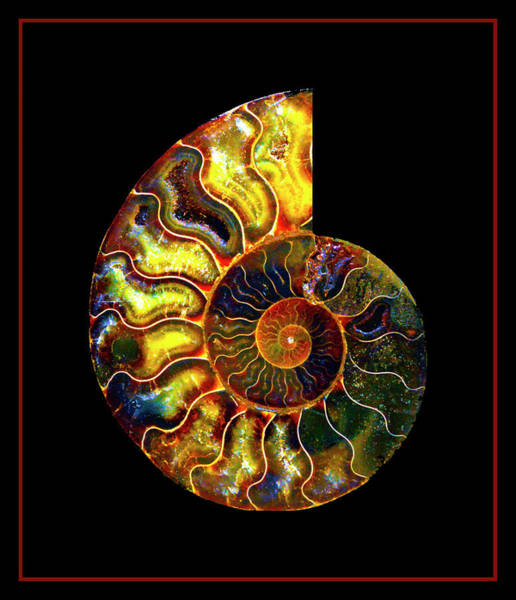 Photograph - Ammonite Fossil - 8322-3 by Paul W Faust - Impressions of Light