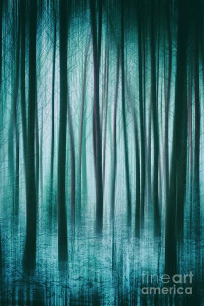 Photograph - Among The Trees by David Lichtneker