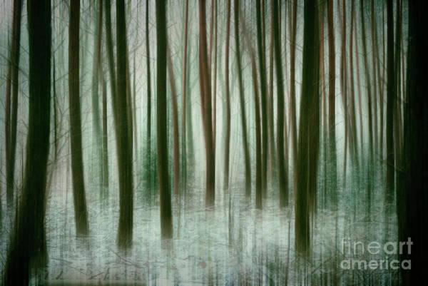Photograph - Among The Trees II by David Lichtneker