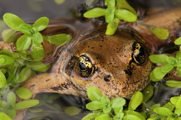 Photograph - Amphibious Eyes by Robert Potts