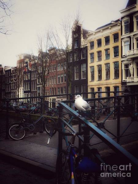 Photograph - Amseagull by Helge