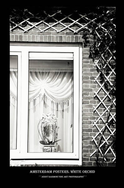 Wall Art - Photograph - Amsterdam Posters. White Orchid by Jenny Rainbow