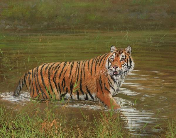 Siberian Tiger Wall Art - Painting - Amur Tiger Cooling Off by David Stribbling