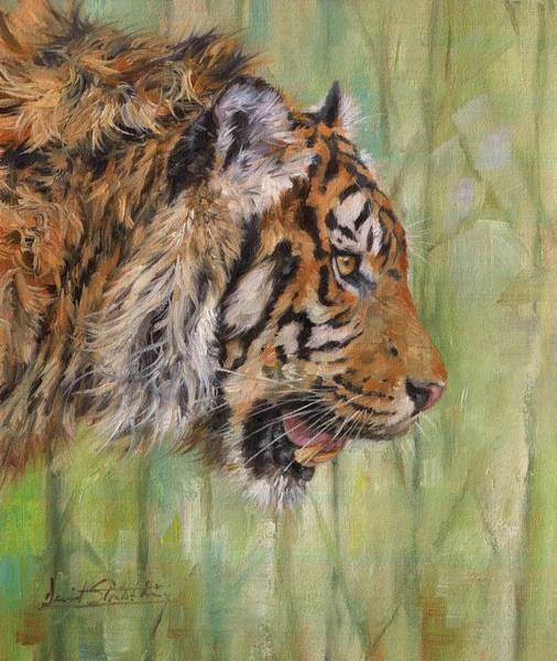 Bengal Tiger Painting - Amur Tiger Profile by David Stribbling