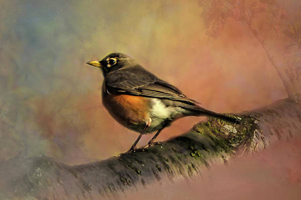 Spring Mountains Mixed Media - American Robin by Isabela and Skender Cocoli
