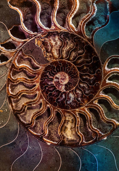 Photograph - An Ancient Shell by Jaroslaw Blaminsky