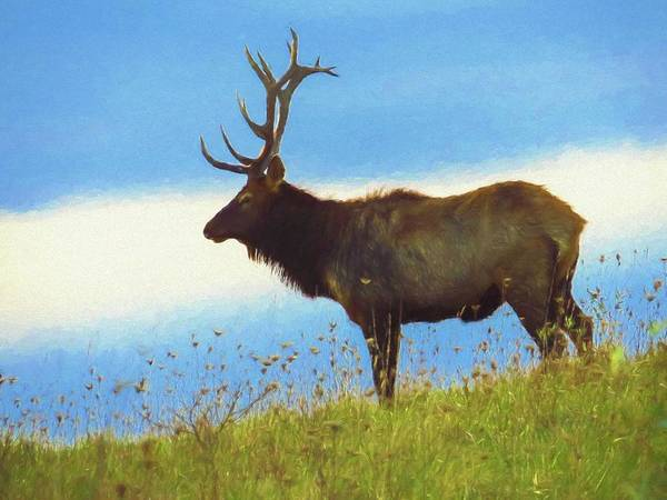 Photograph - An Artistic View Of A Large Bull Elk Standing Alone On A Hill To by Rusty R Smith