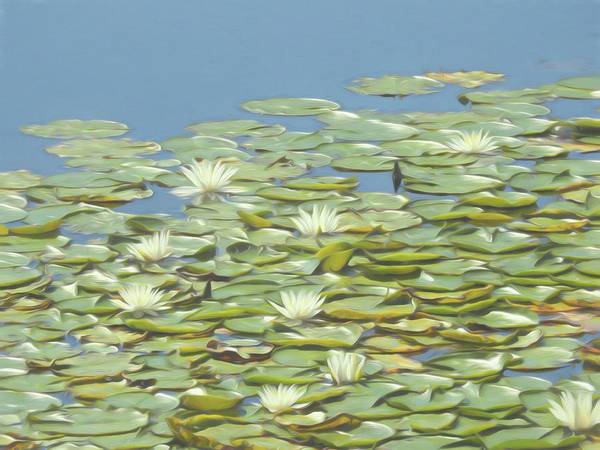 Photograph - An Artistic View Of Many Lillypad Blossom In A Beautiful Group. by Rusty R Smith