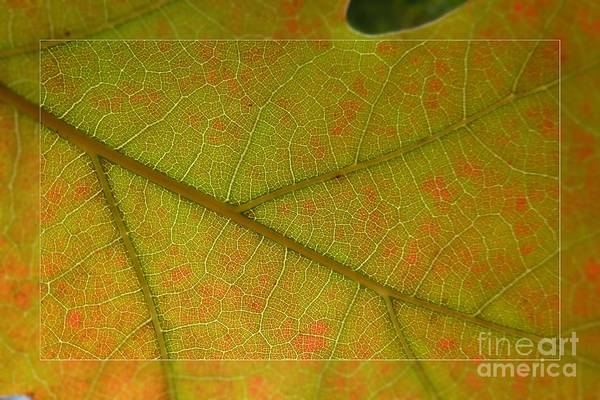 Photograph - An Autumn Leaf by Jean Bernard Roussilhe