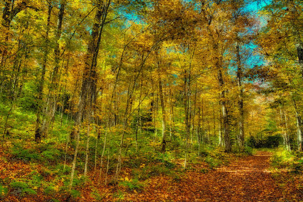 Photograph - An Autumn Walk by David Patterson