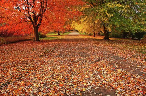 Wall Art - Photograph - An Autumn Walk by Debbie Oppermann