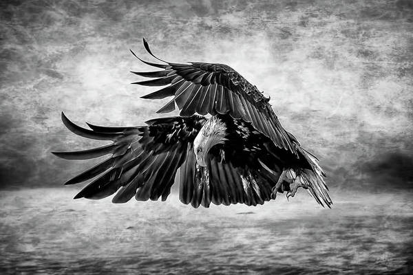 Photograph - An Eagles Quest by Wes and Dotty Weber