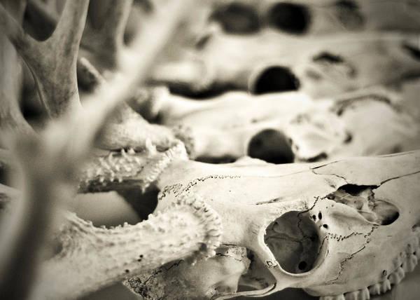 Photograph - An Echo Of Mortality by Rebecca Sherman