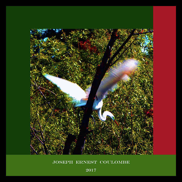 Digital Art - An Egret Sanctuary by Joseph Coulombe