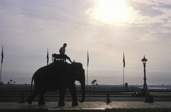 Phnom Penh Photograph - An Elephant At The Royal Palace by Richard Nowitz