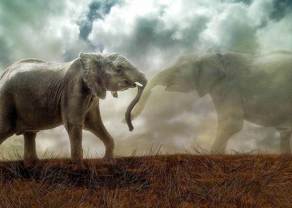 Digital Art - An Elephant Never Forgets by Nicole Wilde