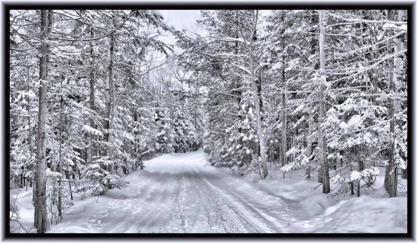 Photograph - An Isolated Country Lane In A Frozen Winter Landscape With Snow-covered Pine And Cedar Trees by Chantal PhotoPix