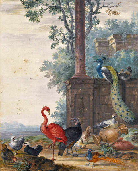 Flamingo Drawing - An Italianate Landscape With A Peacock Pheasant Flamingo And Other Fowl by Johannes van Bronckhorst