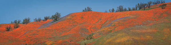 Photograph - An Ocean Of Orange On The Mountain Top by Lynn Bauer