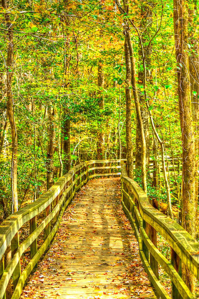 Photograph - An Old Growth Bottomland Hardwood Forest by Don Mercer