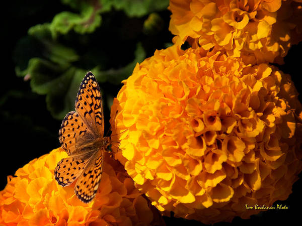 Wall Art - Photograph - An Orange Landing Strip by Tom Buchanan